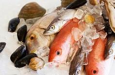 riba i moreprodukti