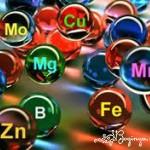 Минеральные вещества